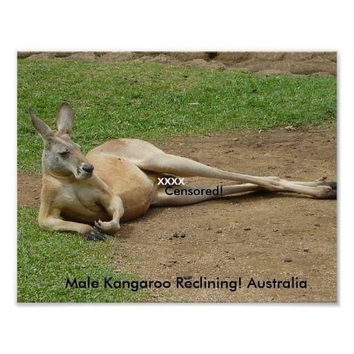 Poster Male Kangaroo Reclining! Australia