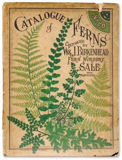 .: Birkenhead Ferns, Seeds Packets, Botanical Prints, Green, Illustration, Book, Ferns Prints, Ferns Catalogue, Gardens Prints