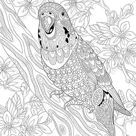 Budgie Parakeet Parrot Adult Coloring Page. by ColoringPageExpress