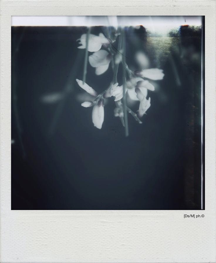 RETRO-CIELI Disegno cerchi di parole asincrone, per chiudermi gli occhi, gentile, sigillando [retro-cieli] la dove i fiori cadono in una pioggia di seta, la luce dal basso.  Ho riposato,  giuro, con i polmoni accesi in un silenzio che trafigge, sorridi, perché hai da restituirmi l'anima.   http://paralleluniverseinpolaroid.wordpress.com