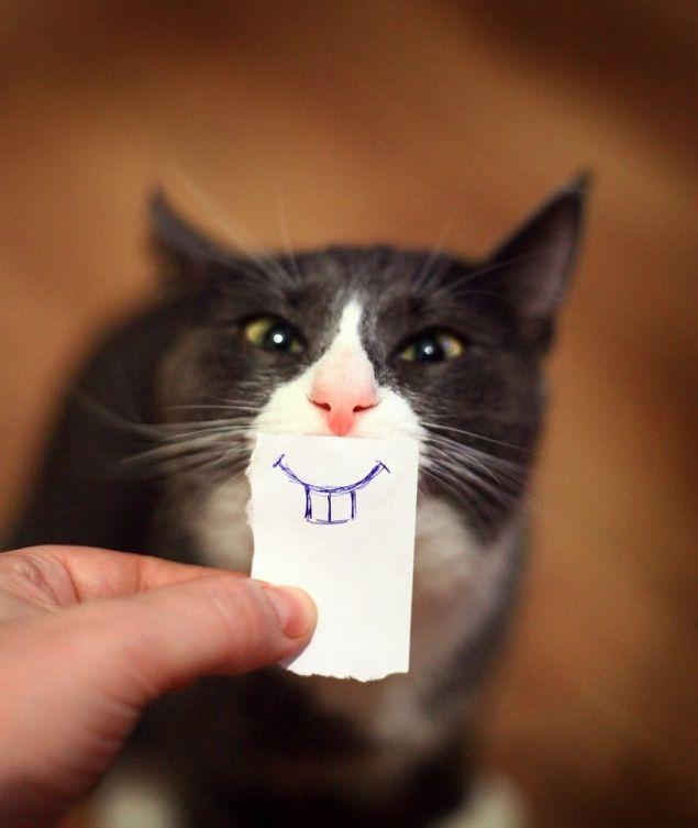 Ein Lacheln Katzen Lustige Katzen Videos Lustige Katzenbilder Katzenhumor