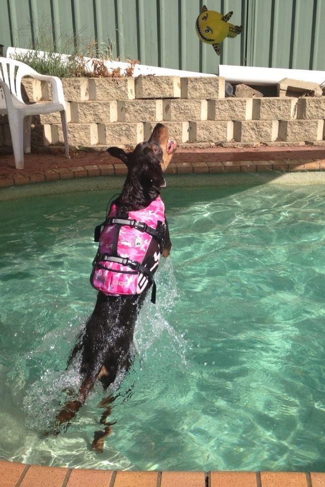 Epilepsy italian greyhound diet