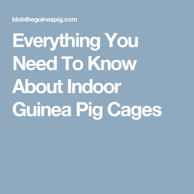 Everything You Need To Know About Indoor Guinea Pig Cages