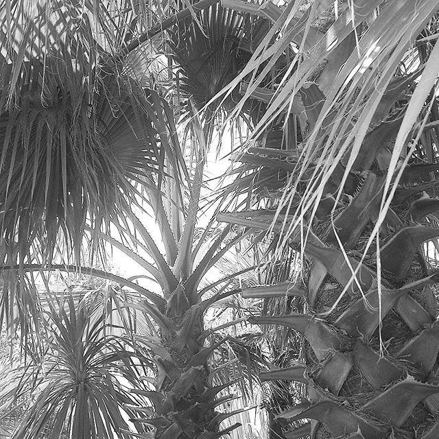 De eerste #werkdag na de #zomervakantie is voorbij.   Denk je ook met veel plezier terug aan je vakantie en wat mis je het meest? Ik mis dit #uitzicht #palmtree #palm #sunnydays #strand #zee #beach #beachlife #bladeren #leave #trees #memories #beachtime🌴