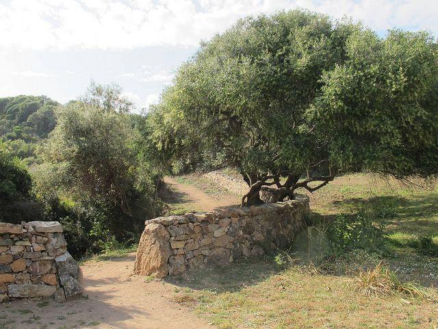Randonnée à la tour génoise d'Omigna, Cargèse (Corse-du-sud) | par Yvette G.
