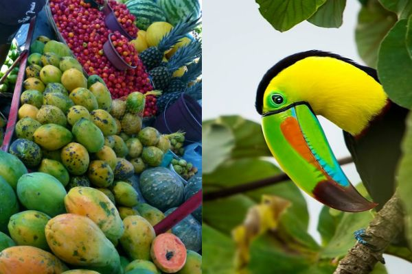 #Brazil #Brasilien #Food #Fruits #Bird #Toucan #Tukan #Travel #Reisen #Urlaub #Opodo