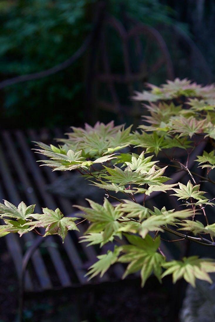 oriental garden supply llc (orientalgardens) on pinterest