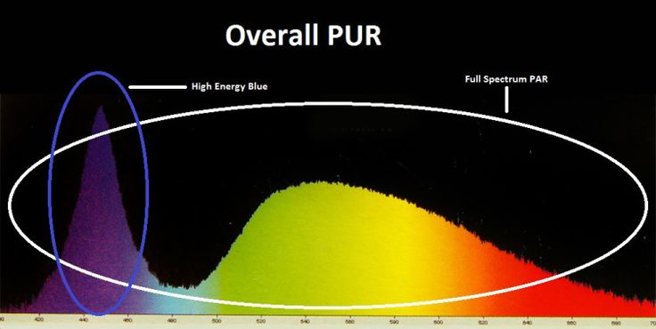 PUR Plant and Reef Light. What's the importance?  http://www.aquarium-digest.com/2010/04/11/led-aquarium-lights-lighting/