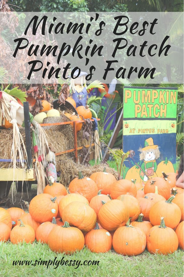Miami's Best Pumpkin Patch - Pinto's Farm - Simply Bessy