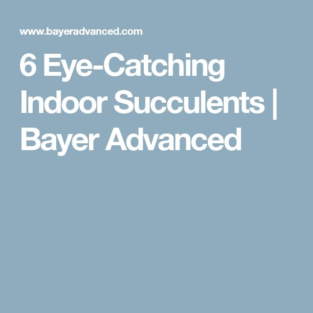 6 Eye-Catching Indoor Succulents | Bayer Advanced