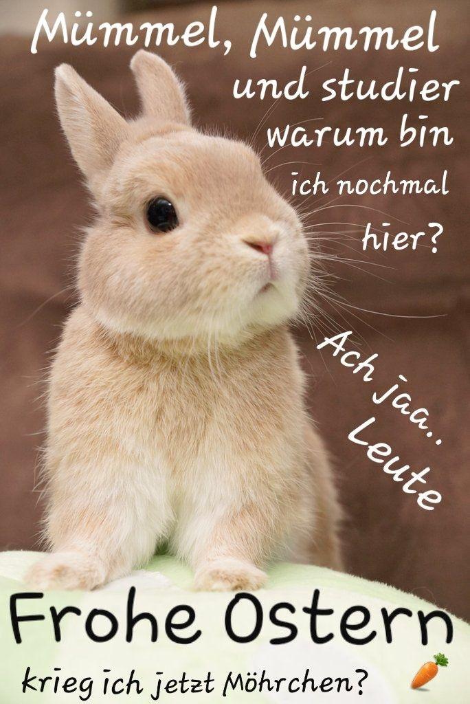 Pin Von Ale Poveda Auf Pascua Frohe Ostern Ostern Lustig