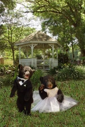 Dade City's Wild Things - Groups & Special Tours - Bear Wedding