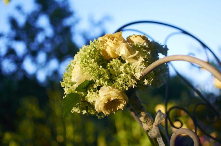 Anglické růže The Pilgrim a Graham Thomas v kombinaci s bílou hortenzií