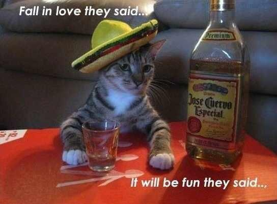 ..Friends, Tequila, Cincodemayo, Funny Cat, Mexicans Parties, May 5, Funny Animal, Jose Cuervo, Drinks