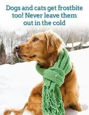 Do Cats And Dogs Get Cold In The Winter