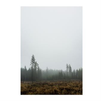 Skog Poster - 70 x 100cm - Fine Little Day