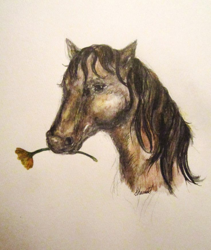 """""""Filly"""" for Harold Tinling, Illustration By Shanni Smith"""