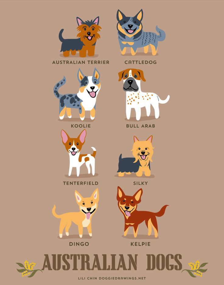 AUSTRALIAN DOGS art print dog breeds from by doggiedrawings