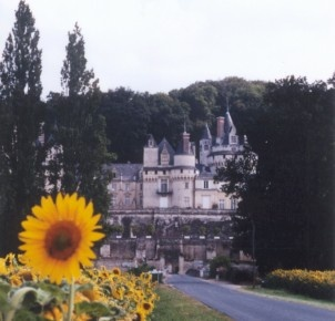 Sunflowers in the Loire Valley.