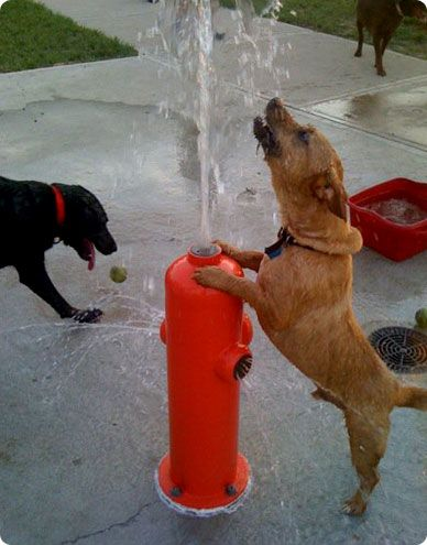 Welcome to NOLA City Bark! woof! woof!