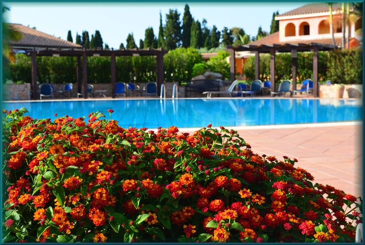 #holidays #hotelandresort #swimmingpool #relaxation #lantanalovers #lantanaresort