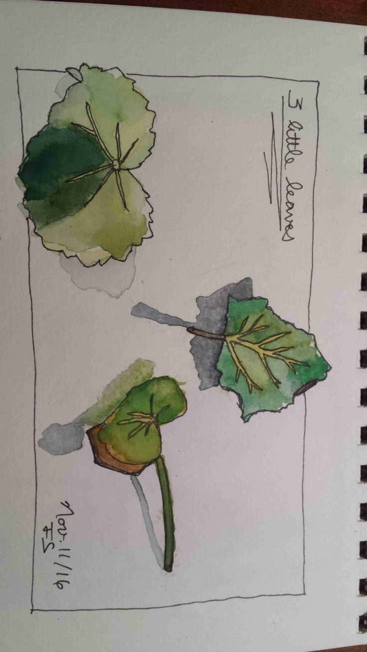 """student work from """"Sketching and Watercolor: Journal Style"""" my online class."""