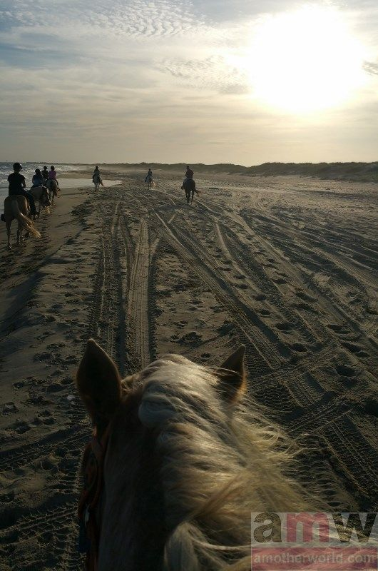 10 Fun Activities to Do Outdoors in the Outer Banks Equine Adventures horseback riding on the beach