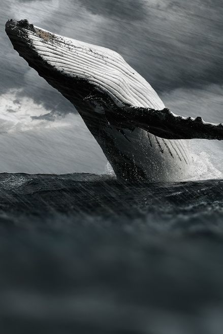 0ce4n-g0d: whale /  Big Bangby Goncalo Martins on 500px