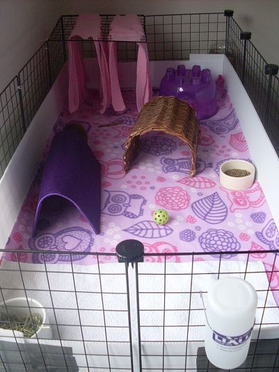 Color coordinated pink and purple C and C cage | Guinea ...