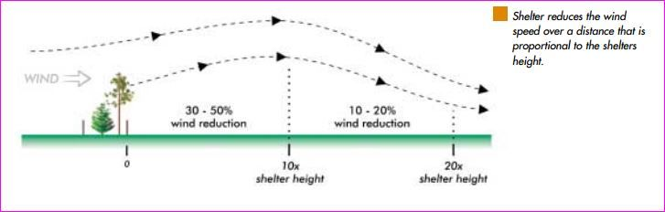 Wind vs Shelter belt height