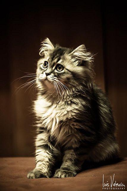 Gaspar I   Flickr - Photo Sharing!