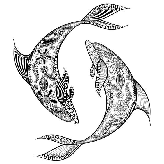 310 Best Coloring Dolphin Whale Shark Images On