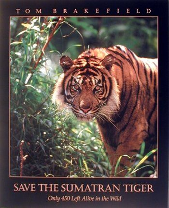 This wall poster is ideal for brighten up any home decor and brings charming character. This poster captures the image of a tiger with a quotation written is Save the Sumatran Tiger which would surely grab lot of attention. It would be perfect gift for any tiger lover. This animal inspired poster will be a great addition to your home. So what are you waiting for, grab this wall poster which offers you both quality and affordability as well.