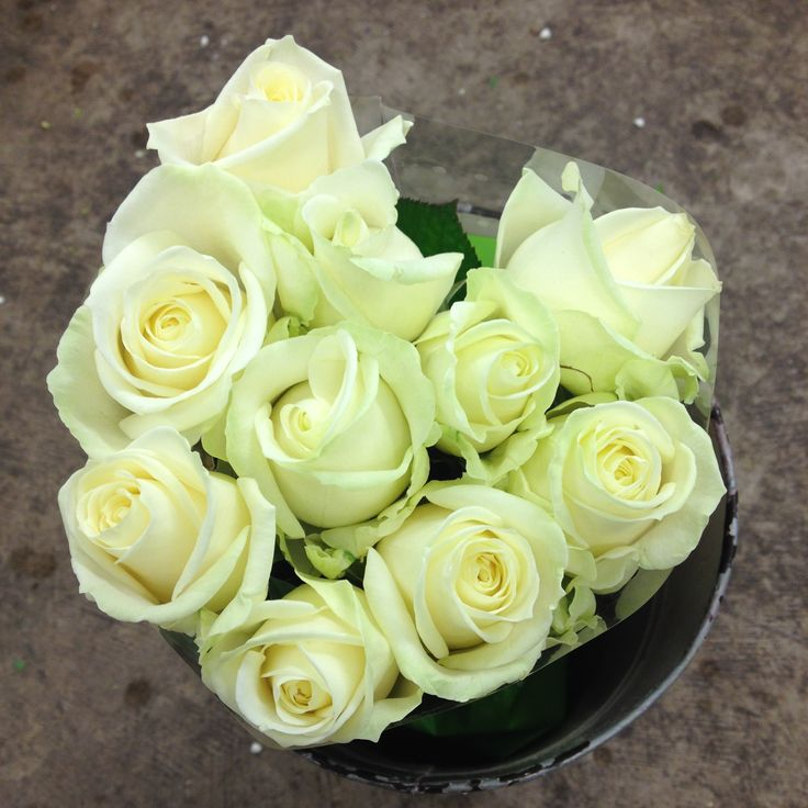 Rose - Avalanche. Sold in bunches of 10 stems from The Flowermonger, the…