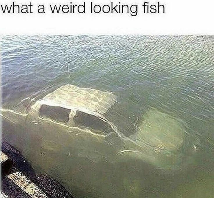 Must be a Ford.