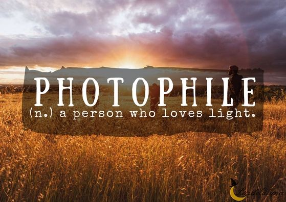 Phile Denotes A Person Who Loves Or Have A Fondness For A Specified Thing Phile Comes From Ancient Greek Word Phileein Meaning To Love