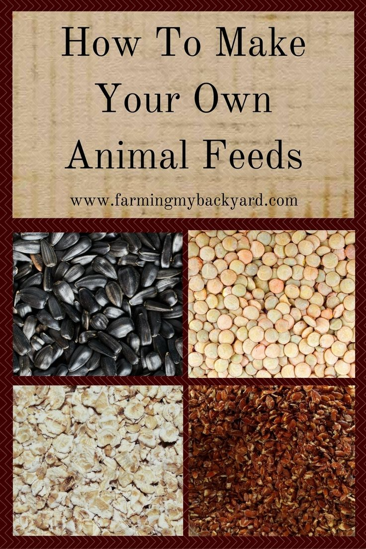 You can make your own animal feeds for your goats, rabbits, or chickens!  You can also supplement your purchased feeds for more nutrition!
