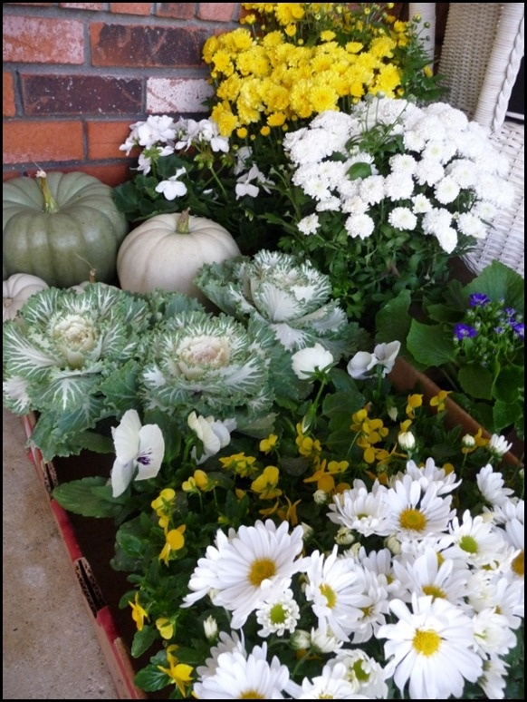 Fall mums and daisies