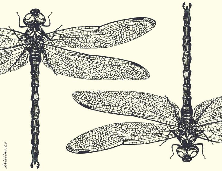 Dragonfly Drawing Artsy Pinterest | How to draw video tutorial step by step