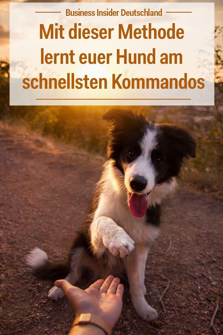 Studie: Mit dieser Methode lernt euer Hund am schnellsten Kommandos
