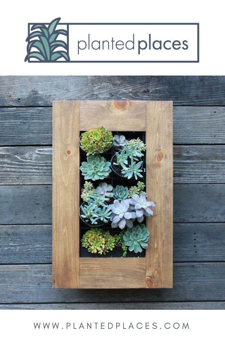 Framed Confetti Creative Kit 15 5 Succulent Frame Plants