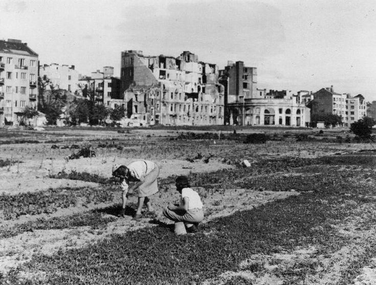 Warszawa - ogródki warzywne na Polu Mokotowskim przy Polnej (1946)