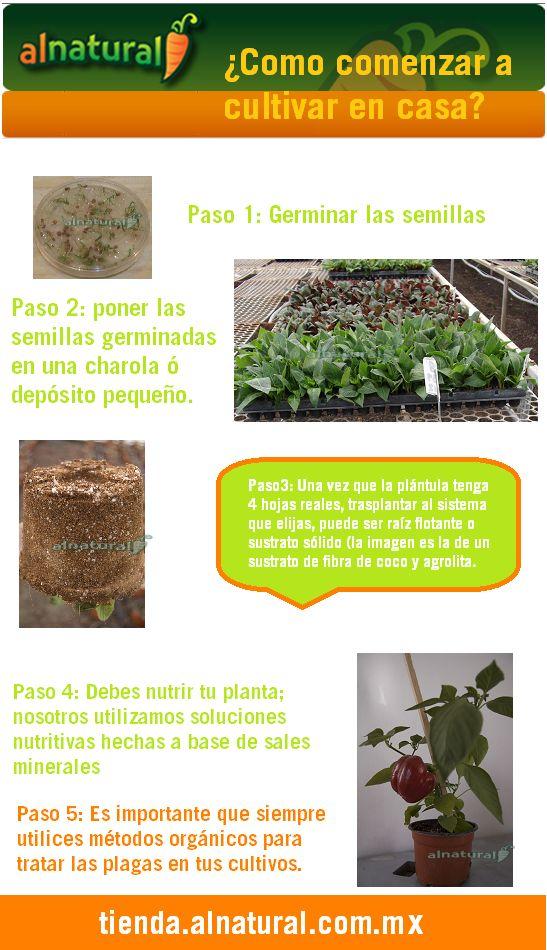 Como cultivar en casa
