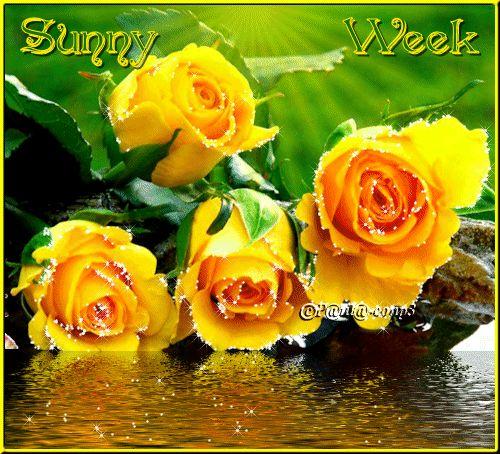 Sunny Week