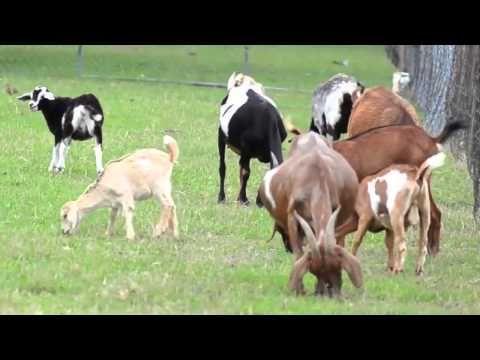 On The Farm - Educational Video by abcteach - YouTube