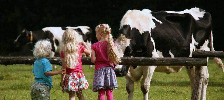 Glamping tussen de #koeien bij Het Betere Boeren bed in Gelderland | Veluwe | Harderwijk. Op Landgoed Volenbeek verblijf je in #luxe #tenten.