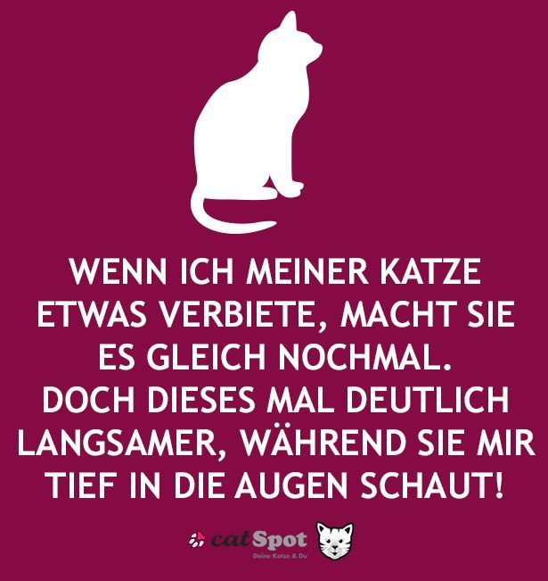 STOP! You love cats? Here at EBENBLATT you'll find the best t-shirts for cat lovers! #katze #katzen #want # shirt #tshirt