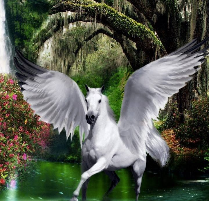Beautiful white Pegasus. | Fantasy | Pinterest | To be ...
