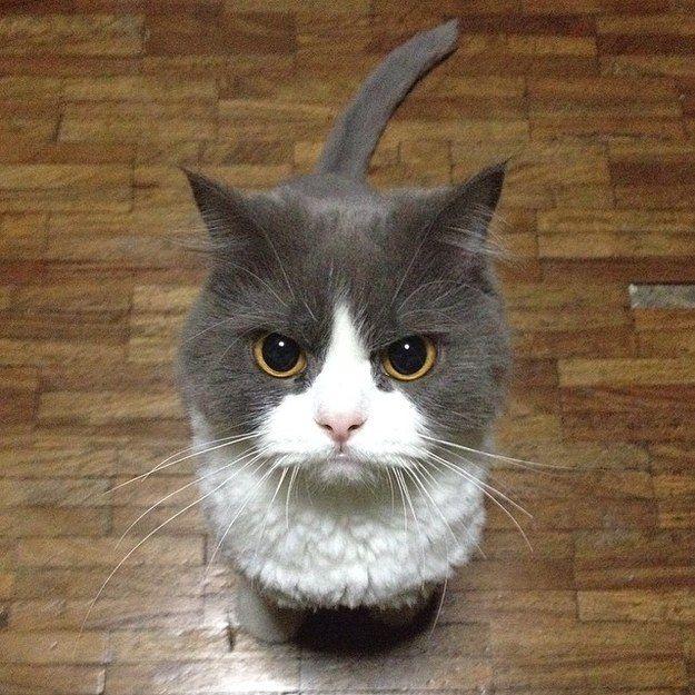 Quand vos collègues laissent leurs tasses sales dans la cuisine et que c'est vous qui devez les nettoyer. | 36 fois où les chats ont parfaitement illustré votre vie au travail