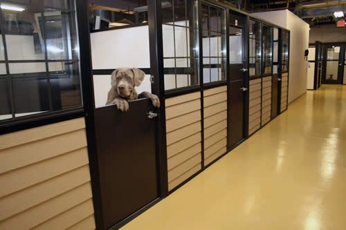 Dog Boarding Design Ideas | Humane Shelters and Boarding Kennel Buildings -love the doors..